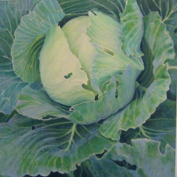 Sarah Paino - Cabbage