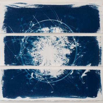 Cyanotype of flower